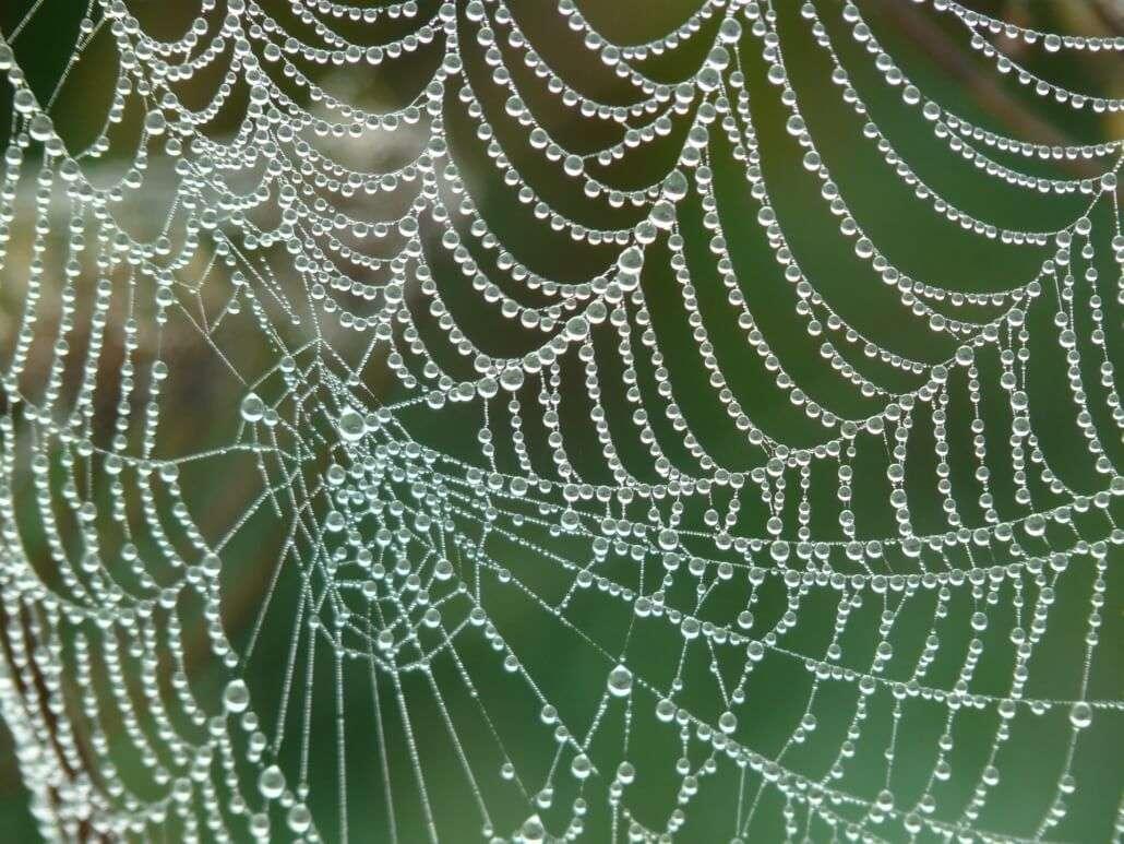 Quantas pessoas são necessárias para abrir uma ONG - Teia de aranha